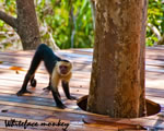 Deck walking monkey