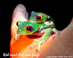 Hand Frogs